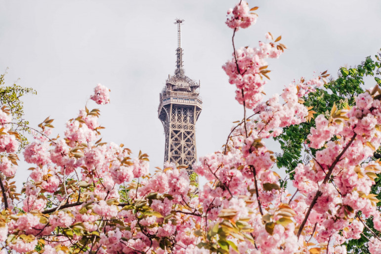 Tour eiffel et cerisiers - Courbet